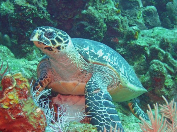 Caribbean Scuba Dive Trips