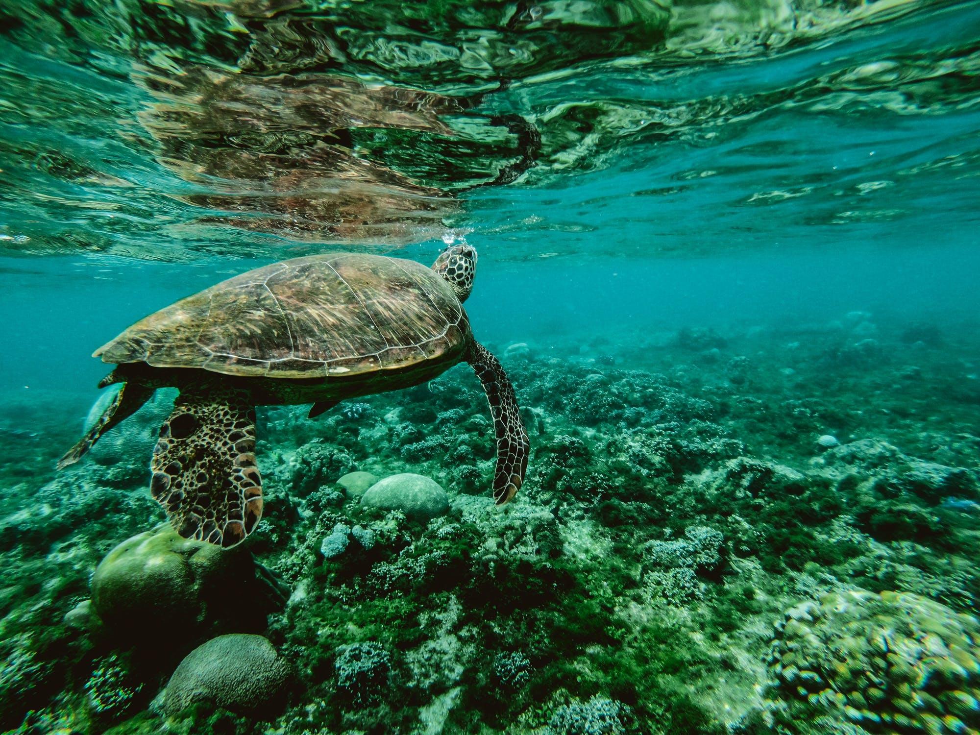 Bahamas – AquaCat Live Aboard