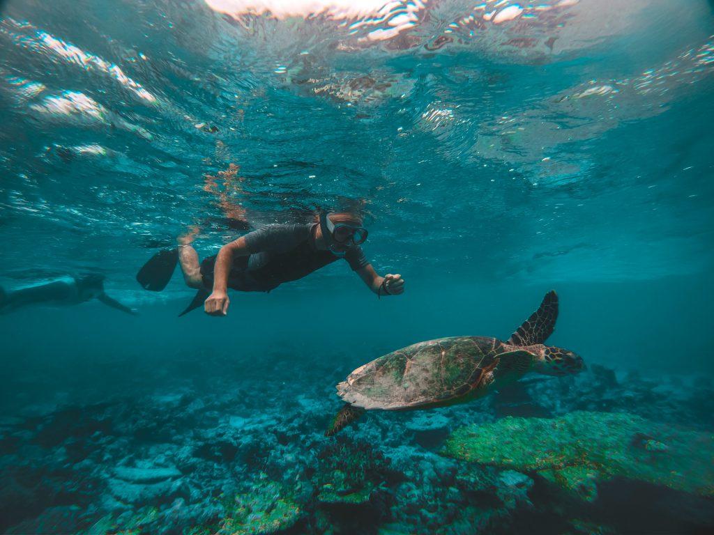 Snorkel Diver