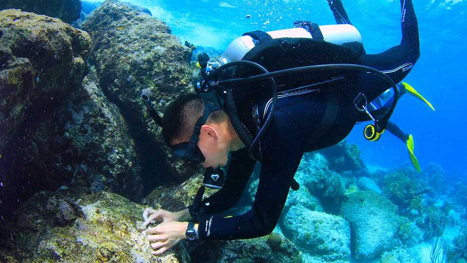 Research Diving