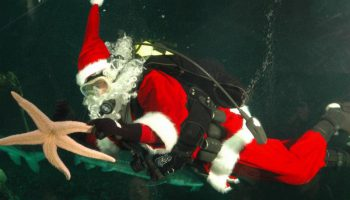 Happy Holidays from Dive.Dive..Dive…
