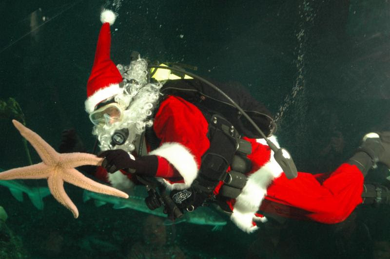 You are currently viewing Happy Holidays from Dive.Dive..Dive…